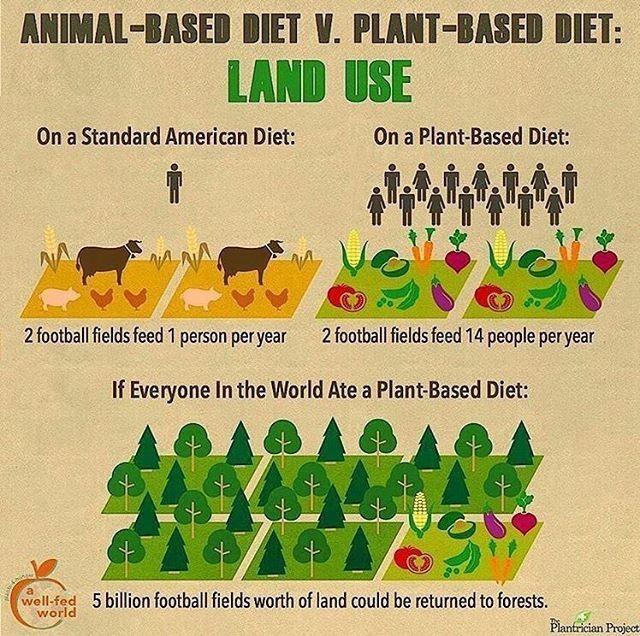 impatto ambientale varie diete